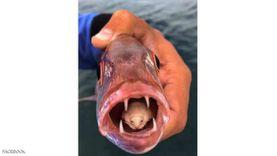بيطري عن الأسماك السامة: «تؤدي للوفاة وخطرها في الغدد وليس اللحم»