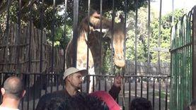 حدائق الحيوان: سنملأ بيت الزواحف بـ«ثعابين».. ونسعى لتدبير فيلة