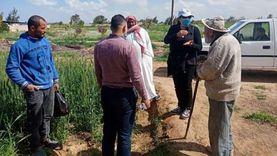 زراعة الإسكندرية: القمح لم يتأثر بالنوة و5 تعليمات للحفاظ على السنابل