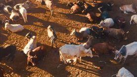 «الوطنية للإنتاج الحيواني»: مجمع الفيوم أكبر مجزر آلي في أفريقيا