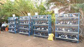وزارتا الزراعة والتضامن توزعان 620 مشروع دجاج بياض للأسر المستفيدة من الدعم النقدي
