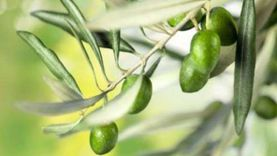 الزراعة: وضع خطة للتوسع في المحاصيل الزيتية لسد الفجوة الغذائية