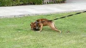 بسبب كلب.. إصابة 4 أشخاص من أسرتين في مشاجرة بالدقهلية