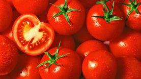 """""""الزراعة"""" تتوقع انخفاض سعر الطماطم إلى 5 جنيهات بعد أسبوع"""