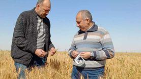 الزراعة تتابع تجهيز التقاوي بالوادي الجديد