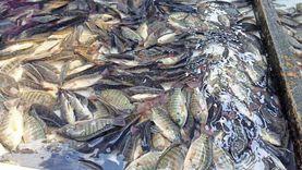 الركود يضرب سوق السمك: تراجع المبيعات 70%