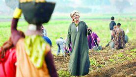 محوران لتحقيق الأمن الغذائي تنفذها «الزراعة».. تعرف عليها