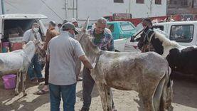 علاج 960 رأس ماشية بقافلة بيطرية مجانية في الدقهلية