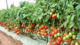 «الإسماعيلية» تصدر بـ549 مليون جنيه خضروات وفاكهة خلال 5 أشهر