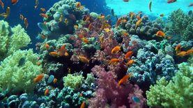 البيئة: تجديد 70 «شمندورة» بجنوب سيناء لتأمين حركة المراكب السياحة