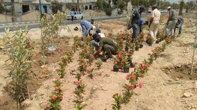 رفع 70 ألف طن قمامة وزرع أشجار زينة بمدينة مرسى مطروح