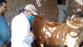 الزراعة: تحصين أكثر من مليون رأس ماشية ضد مرض الحمي القلاعية