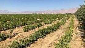 الزيادة السكانية تخفض نصيب المزارع من 6 أفدنة لـ«قيراط»