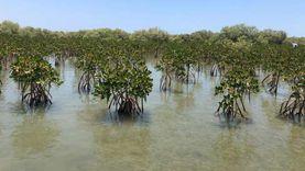 مشروع للتوسع في زراعة غابات المانجروف في البحر الأحمر وسيناء