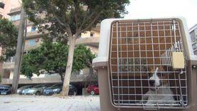 حكم تربية الكلاب في المنزل.. المفتي: نجسة عند الجمهور وطاهرة بالمالكية