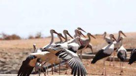 الطيور المهاجرة تروج للسياحة البيئية بحضور 20 وكالة عالمية بشرم الشيخ