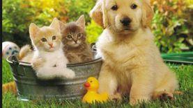 فيروس كورونا يضاعف أعداد القطط والكلاب المستوردة في كوريا الجنوبية
