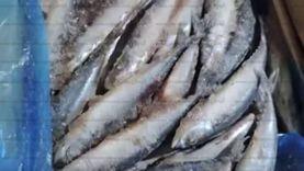ضبط 4 أطنان أسماك فاسدة داخل ثلاجة حفظ في القليوبية