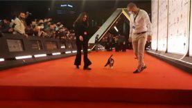 لليوم الثاني على التوالي قطة على ريد كاربت القاهرة السينمائي