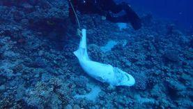 رئيس قطاع حماية الطبيعة: لا وجود للقرش الأبيض في البحر الأحمر