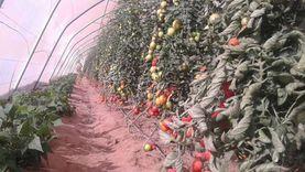 زيادة الرقعة الزراعية بجنوب سيناء إلى 204 آلاف فدان