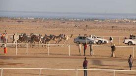انطلاق مهرجان الهجن المحلي بشرم الشيخ بمشاركة 1100 متسابق