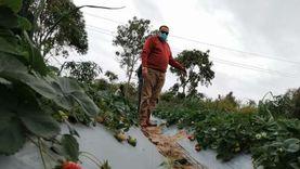 أستاذ اقتصاد: الدولة وضعت خطة قومية لزراعة 2.5 مليون فدان