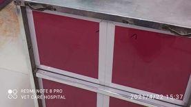 نقلته الإسعاف.. غرفة عمليات لإنقاذ «قط» في البحيرة: خضع لجراحة خطيرة (صور)