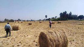 """""""الزراعة"""" تجمع 1.9 مليون طن قش أرز وتنظم 1508 ندوة بـ6 محافظات"""