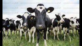 انطلاق الحملة القومية الثانية لتحصين الماشية ضد الحمى القلاعية بالفيوم