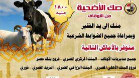 الأوقاف تشكر 3 مديريات لتفوقها في مبيعات صكوك الأضاحي
