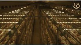 مصر على طريق تحقيق الاكتفاء الذاتي من الدواجن واللحوم (فيديو)