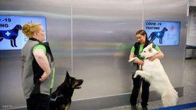 كلاب وأساور إلكترونية وروبوتات.. طرق عالمية لمواجهة فيروس كورونا