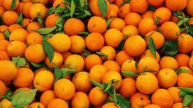 ارتفاع قياسي للصادرات الزراعية وقفزة في الموالح والبطاطس