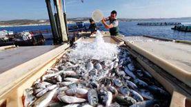 إزاي تفرق بين السمك «الطازة» والفاسد؟.. 12 علامة «خلي بالك منها لما تشتري»