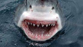 عاجل.. البيئة: إصابة 3 أشخاص في هجوم لسمكة قرش بجنوب سيناء