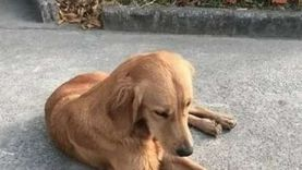 رصدت مكافأة 500 ألف دولار.. كلبا ليدي جاجا يعودان إليها بعد اختطافهما