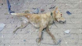 كلب مسعور يثير الرعب في الأقصر ويعقر 20 طفلا