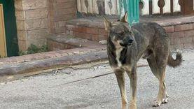 الكلاب الضالة تهاجم الأطفال وتثير الرعب بشوارع رأس البر