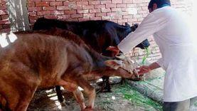محافظ مطروح يتابع الحملة القومية الثانية لتطعيم الأغنام والأبقار
