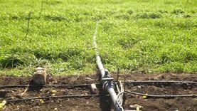 لمواجهة الفقر المائي.. الزراعة: الأولوية لأصناف الزراعات الموفرة للماء