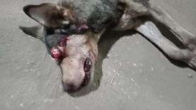 كلب مسعور يهاجم أهالي فرشوط ويعقر 6 أطفال