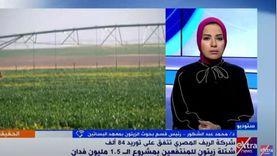 رئيس بحوث الزيتون: سنورد 84 ألف شتلة لدعم مزارعي مشروع 1.5 مليون فدان