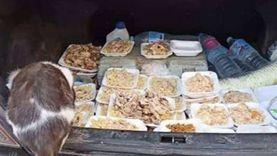 زوجان يقدمان وجبات فاخرة لقطط وكلاب الشوارع بكفر الشيخ: لحوم ومياه معدنية