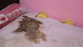 """صارع الجوع 9 أيام حتى الموت.. """"الوطن"""" في منزل الرضيع أنس ضحية عناد والديه (فيديو)"""