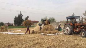 بدء حصاد القمح شرق القناة بالإسماعيلية وتوريده للصوامع «صور»