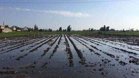 زراعة 35 ألف فدان قمح في الغربية حتى الآن