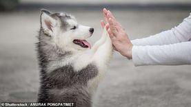 هل الكلب نجس ويمنع دخول الملائكة المنزل؟.. «الإفتاء» تحسم الجدل
