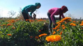 «زراعة القليوبية»: إقبال ملحوظ على التحول لنظام الري بالتنقيط