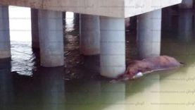 ضبط مصانع بالقاهرة والقليوبية تستخدم حيوانات نافقة لتصنيع الأعلاف